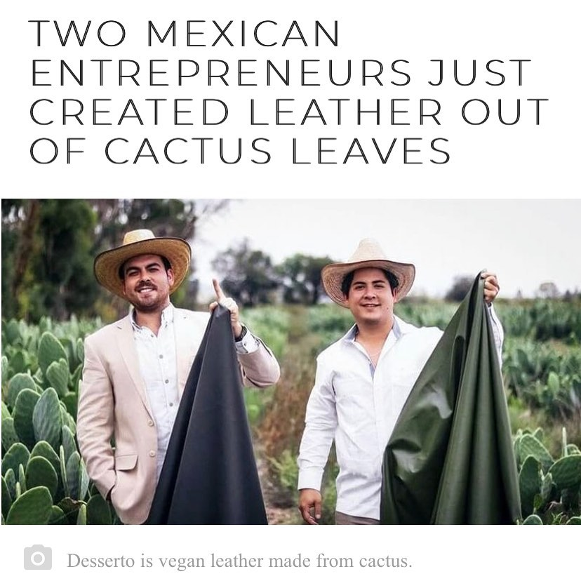 """""""Adrián López Velarde and Marte Cázarez are said to be the first to create organic leather out of only nopal (prickly-pear) cactus. They don't use toxic chemicals, phthalates, or PVC in their design."""" #MEXtalksMonday . . . Link in bio"""